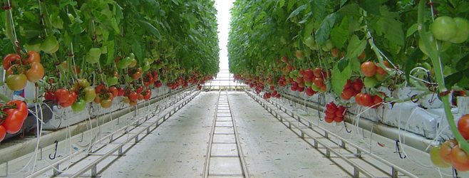 Maximizing Hydroponic Crop Production Greenhouse Product