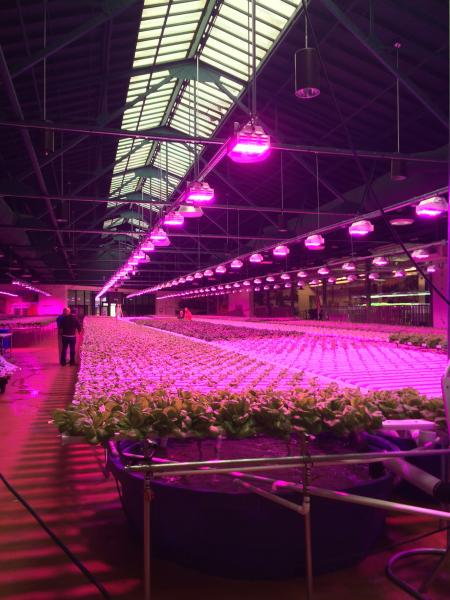 Led Lighting And Its Effect On Plants Growers The World
