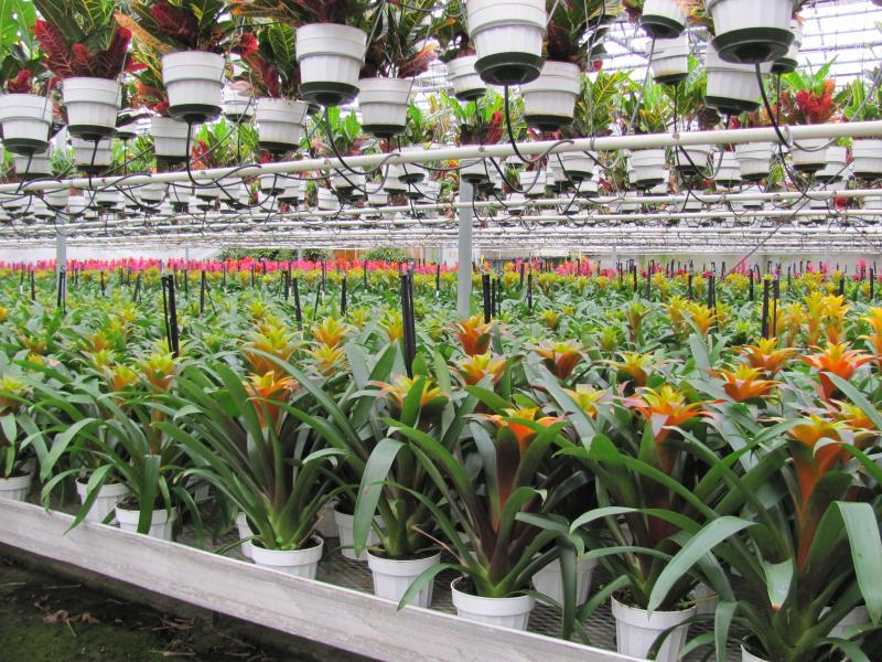 tropical foliage plants your worst enemies  greenhouse product news, Natural flower